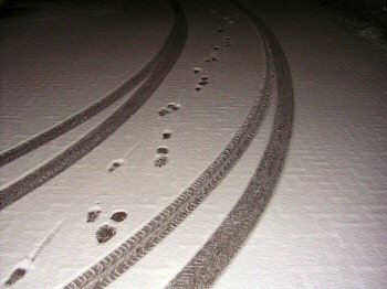 Picture of footsteps and tyremarks in the snow