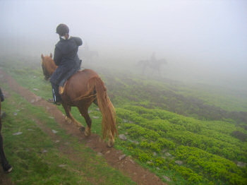 Picture of horse riders in the fog