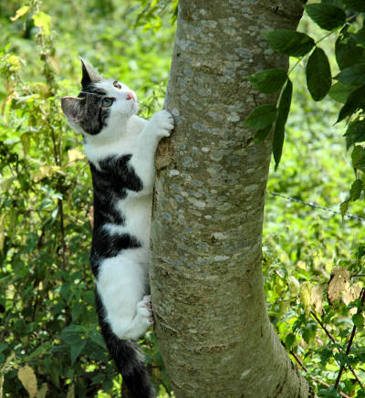 Picture of a young cat climbing up a tree
