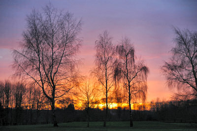 Picture of a colourful sunset behind three trees