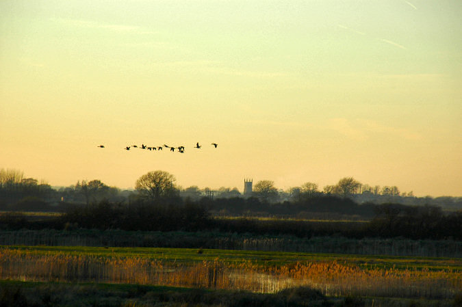 Picture of a flock of geese over a flat landscape with a church tower in the distance