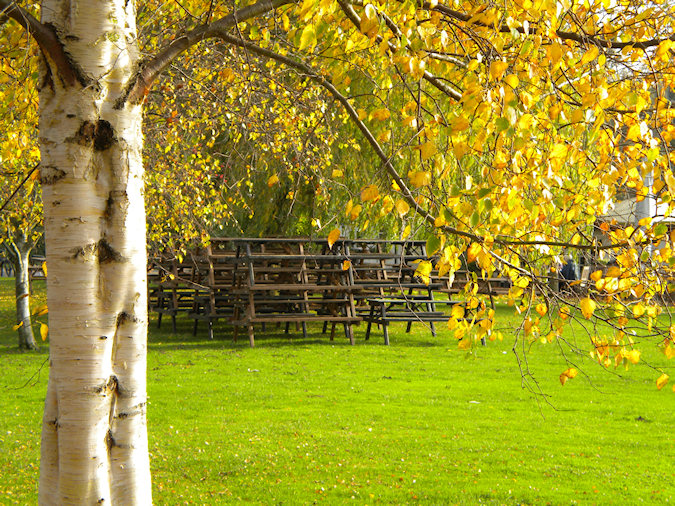 Picture of pub beer garden benches piled up, seen from under tree in autumn colours