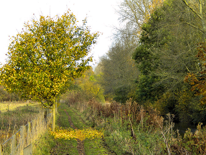 Picture of a single tree next to a grassy path, the fallen yellow leaves providing an interesting contrast