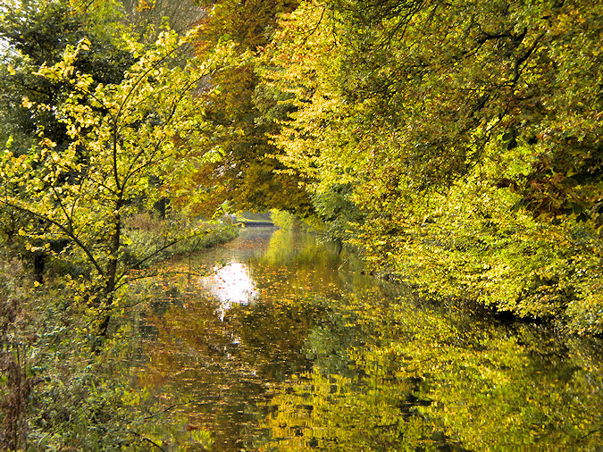 Picture of trees in autumn colour along a canal, reflecting in the water