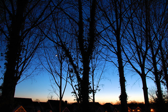 Picture of tree branches against a winter evening sky in the twilight