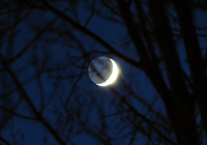 Picture of a crescent moon through the branches of trees