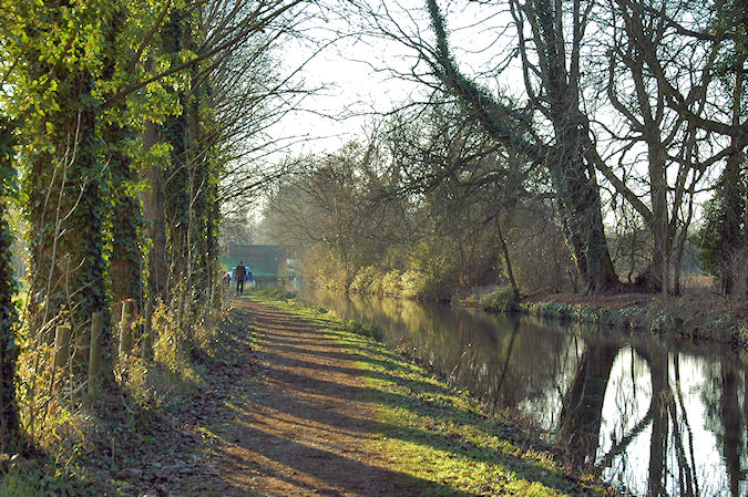 Picture of the sun shining through trees along a canal