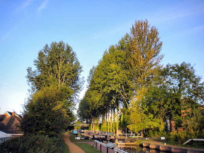 Picture of two rows of poplar trees along a canal behind a lock